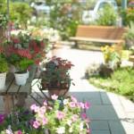 植木の手入れ|雑草の処理